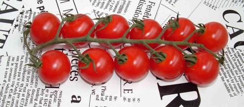 tomate cerise.jpg